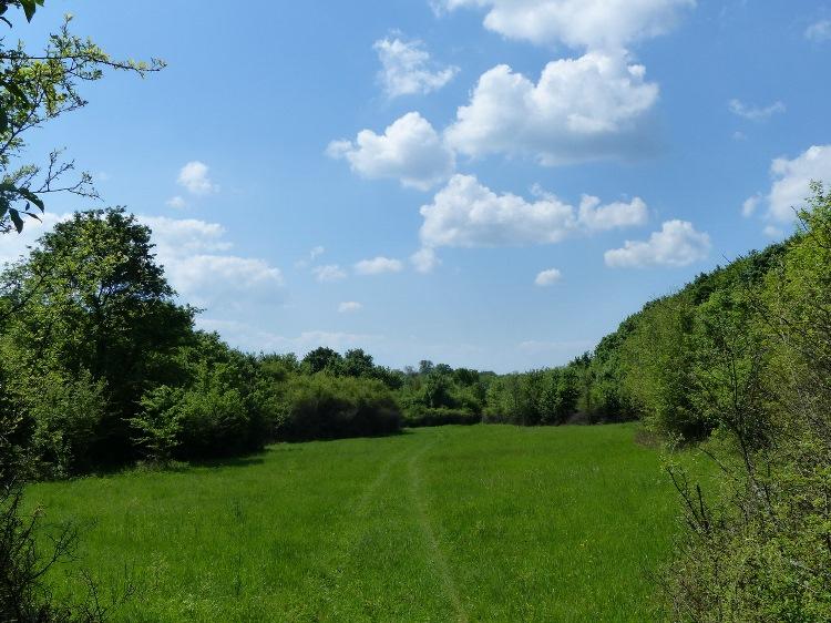 Grassy wheel tracks on the meadow of Mész-völgy Valley