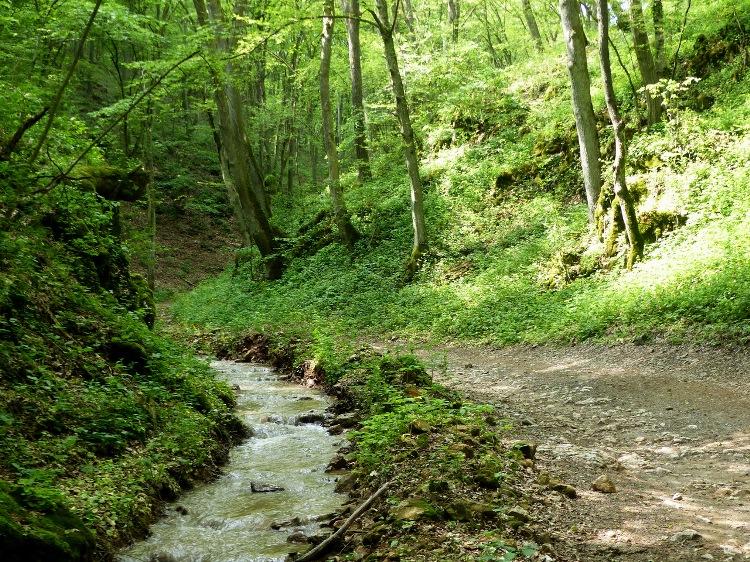 Walk beside the Tohonya-patak Creek