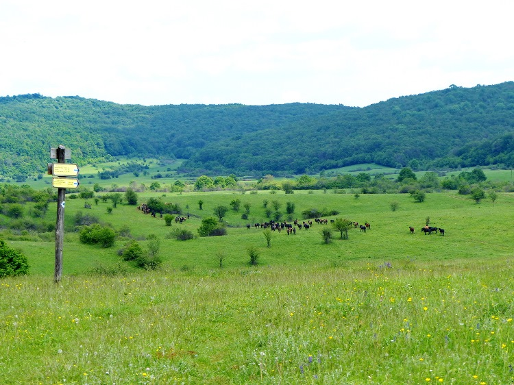The panorama of the plateau from the stable of the Hucul Herd