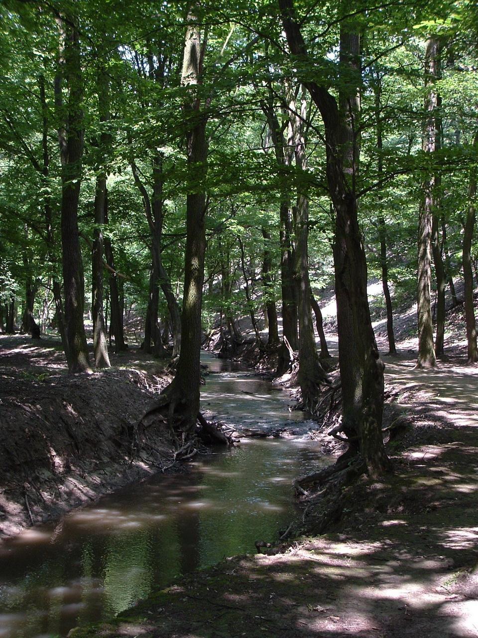 The path leads beside the Gaja Creek