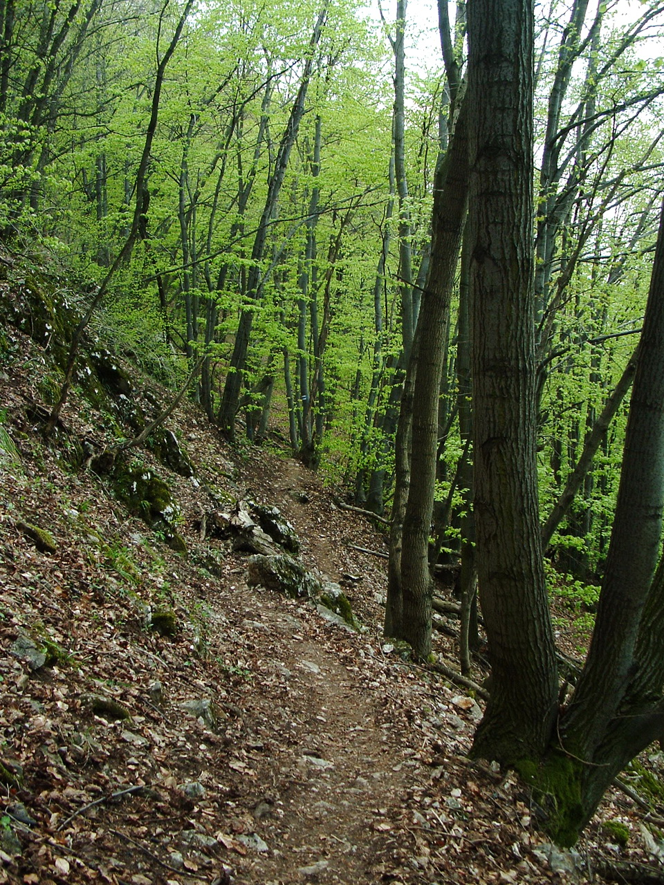 On the steep northern side of Naszály Mountain