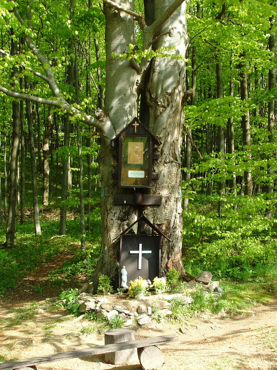 Mary-tree on the Faktor-rét Meadow