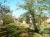 Dorog - A Kesztölci út mellett fut a volt Homokvasút töltése
