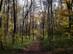 A Kőris-völgy erdei földútján 3.