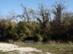 Zsíros-hegy - A turistaház maradványait már benőtte az erdő