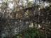 Zsíros-hegy - A turistaház romjai közelről
