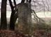 Budapest öreg határköve az erdőszélen
