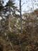 A Kecske-hegy sziklái a Glück Frigyes útról nézve