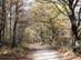 Erdei úton a Szent-kút felé