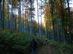 A kéktúra földútján a Luczenbacher út bükkösében