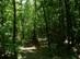 Ereszkedés közben elérjük az erdőt