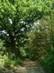 Öreg tölgyfa áll őrt a földút mellett