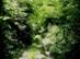 Benőtt erdei úton kapaszkodunk a Csóka-hegy oldalában