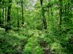 Négyszáz méter felett kezd kitisztulni az erdő