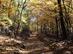 Őszi erdőjárás a Dobogó-tető és a Gyertyános közötti széles nyeregben 1.