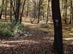 Őszi erdőjárás a Dobogó-tető és a Gyertyános közötti széles nyeregben 2.