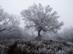 Zúzmarás fák egy téli túrán a Nagy-Szár-hegy oldalában