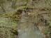 A Laskó-patak keresztezése