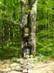 Képes fa áll a Faktor-rét szélén