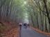 Az új országút az erdőben vezet