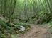A Tohonya-patak völgye nyáron 2.