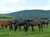 A Hucul ménes lovai közelről