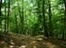 Kapaszkodás az erdőben a hegyek közé