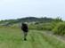 Füves keréknyomokon a Nyésta feletti dombon