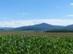 A zempléni hegyek látképe a mezei útról