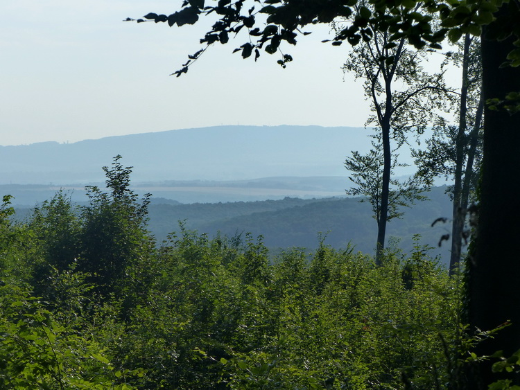 View from the edge of a clear cut. We can see the Vértes Mountains in the distance.